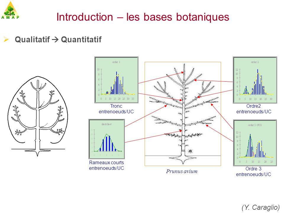 Introduction – les bases botaniques