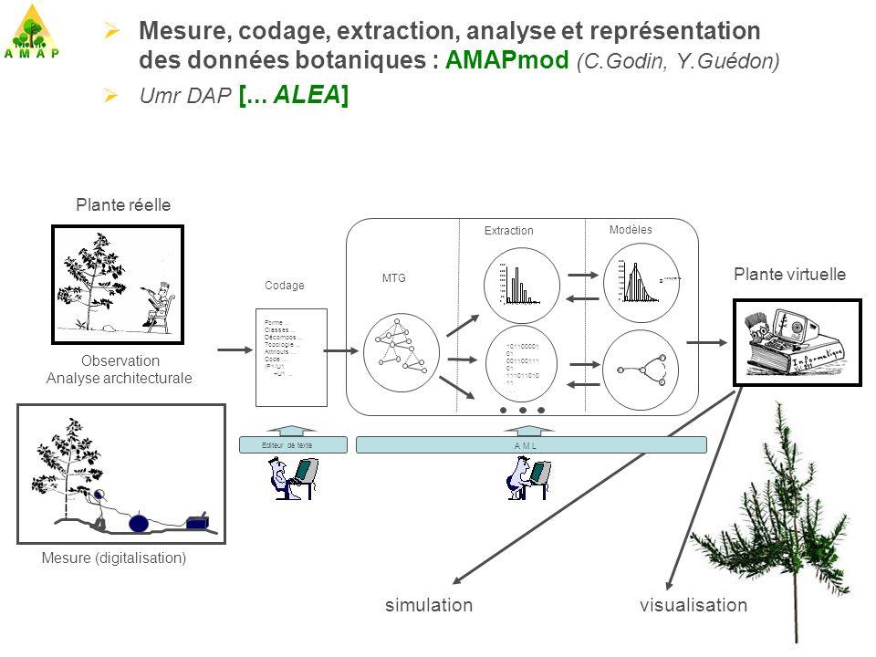 Mesure, codage, extraction, analyse et représentation des données botaniques : AMAPmod (C.Godin, Y.Guédon)