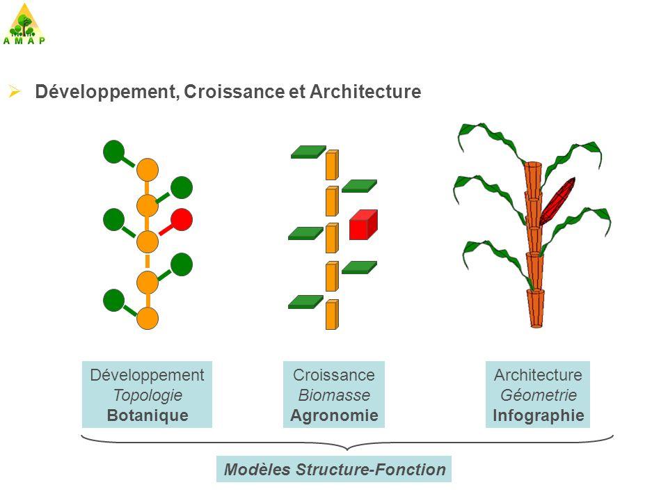 Modèles Structure-Fonction