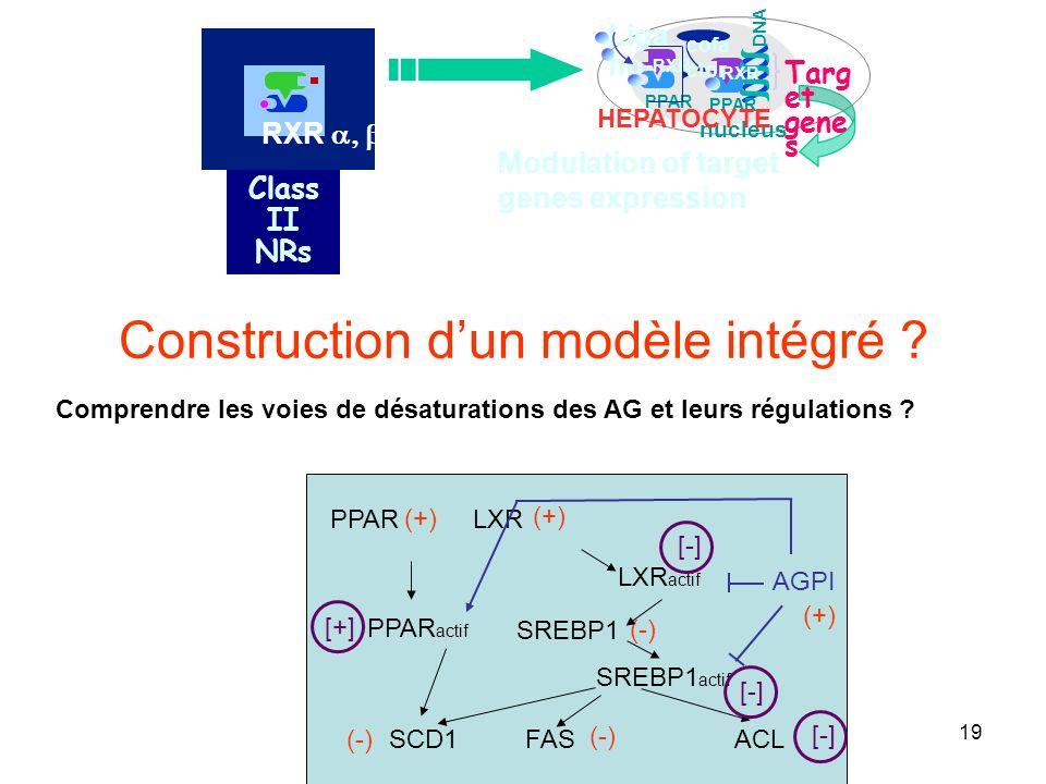 Construction d'un modèle intégré