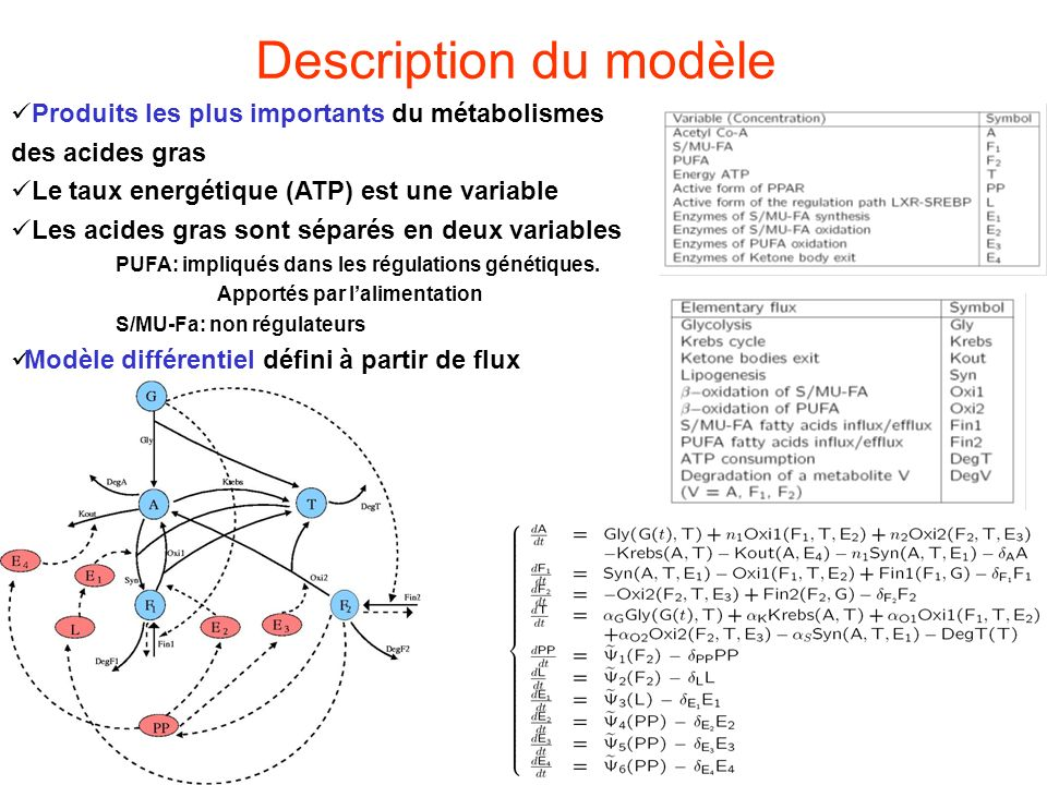 Description du modèle Produits les plus importants du métabolismes des acides gras. Le taux energétique (ATP) est une variable.