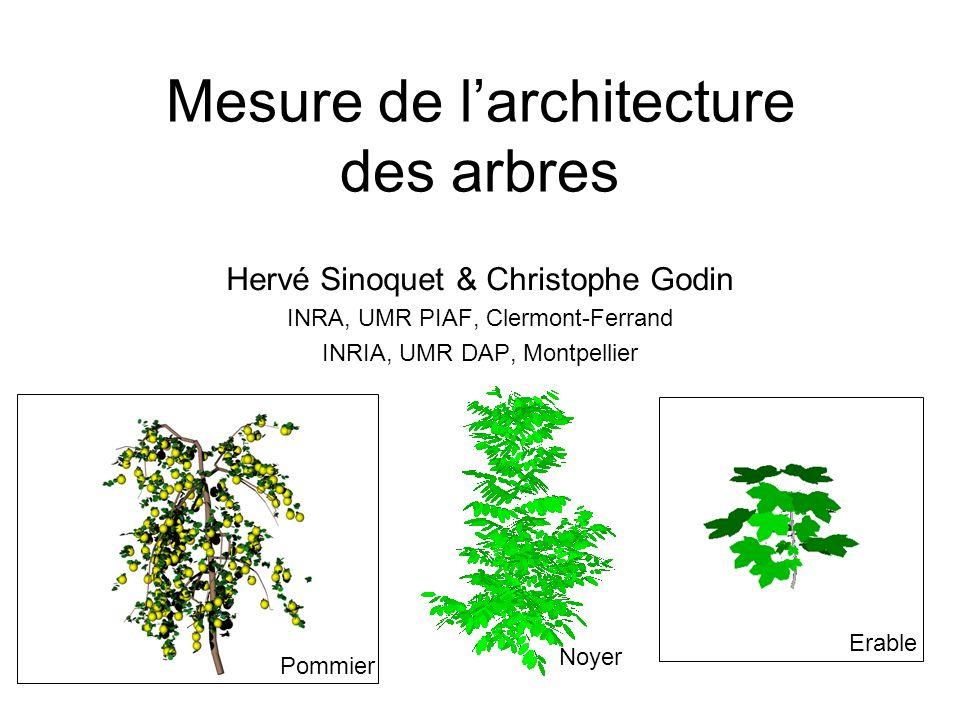 Mesure de l'architecture des arbres