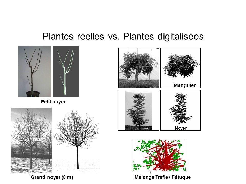 Plantes réelles vs. Plantes digitalisées