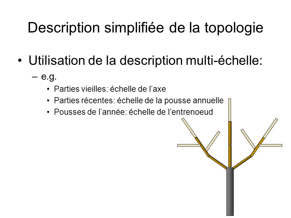 Description simplifiée de la topologie