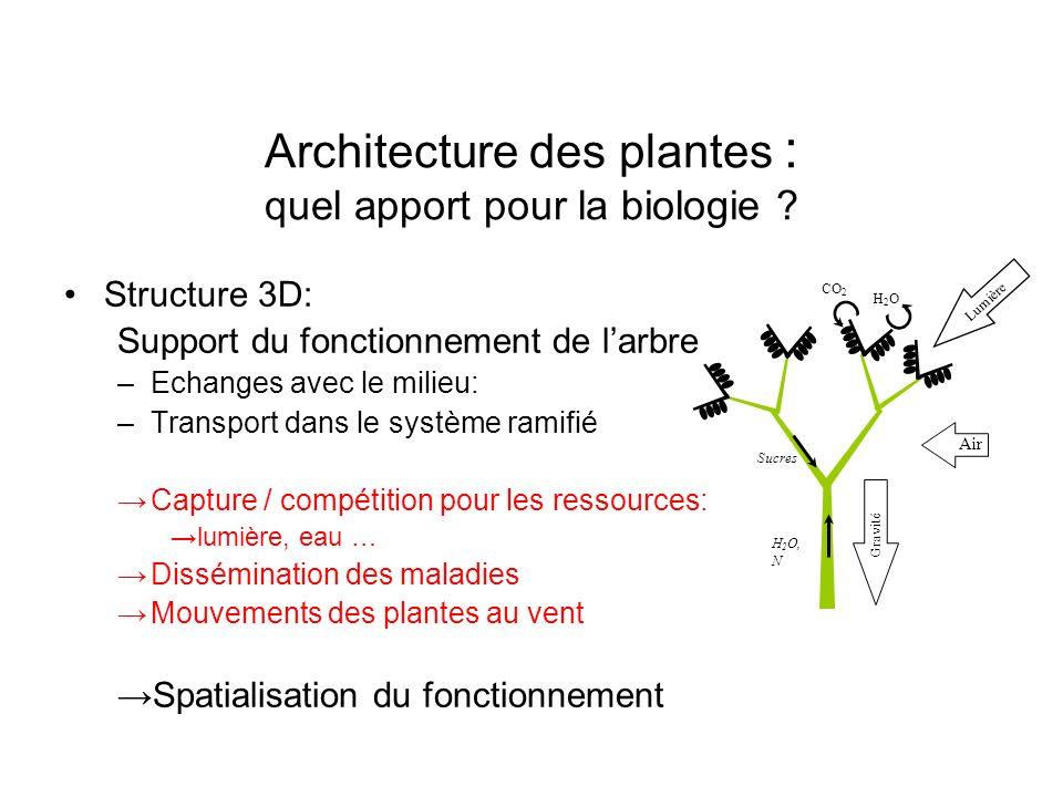 Architecture des plantes : quel apport pour la biologie
