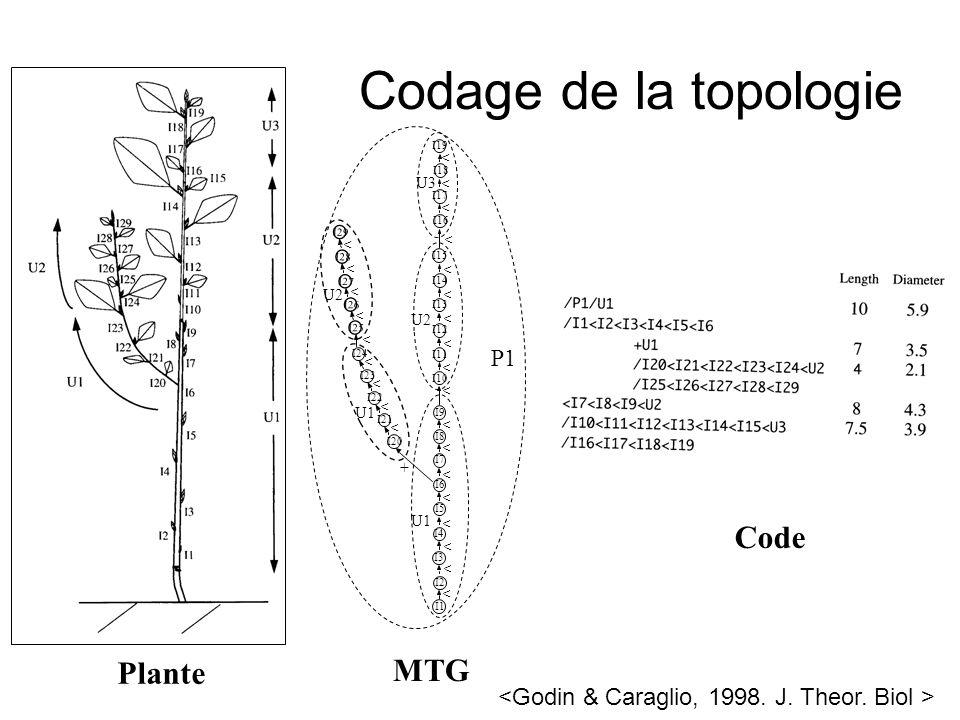 Codage de la topologie Code Plante MTG P1