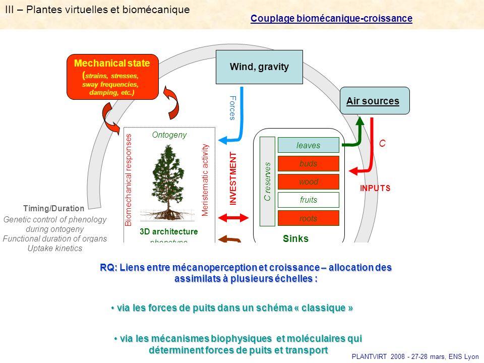 III – Plantes virtuelles et biomécanique