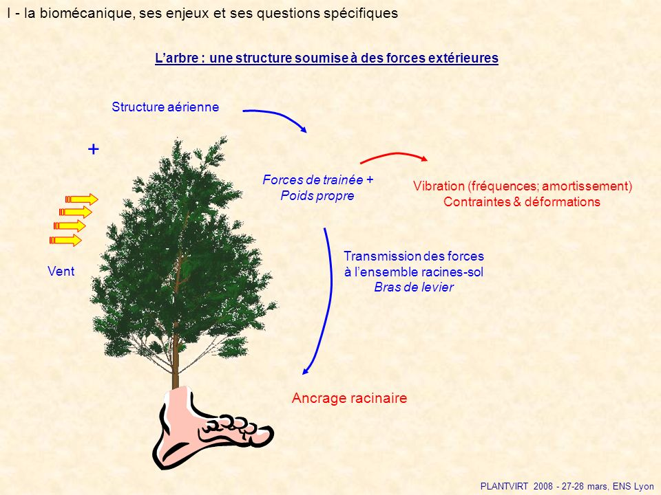 + I - la biomécanique, ses enjeux et ses questions spécifiques