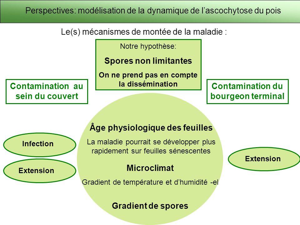 Perspectives: modélisation de la dynamique de l'ascochytose du pois