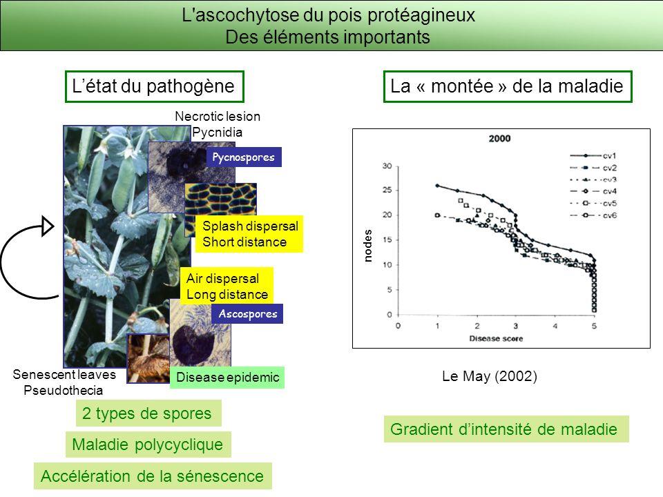 L ascochytose du pois protéagineux Des éléments importants