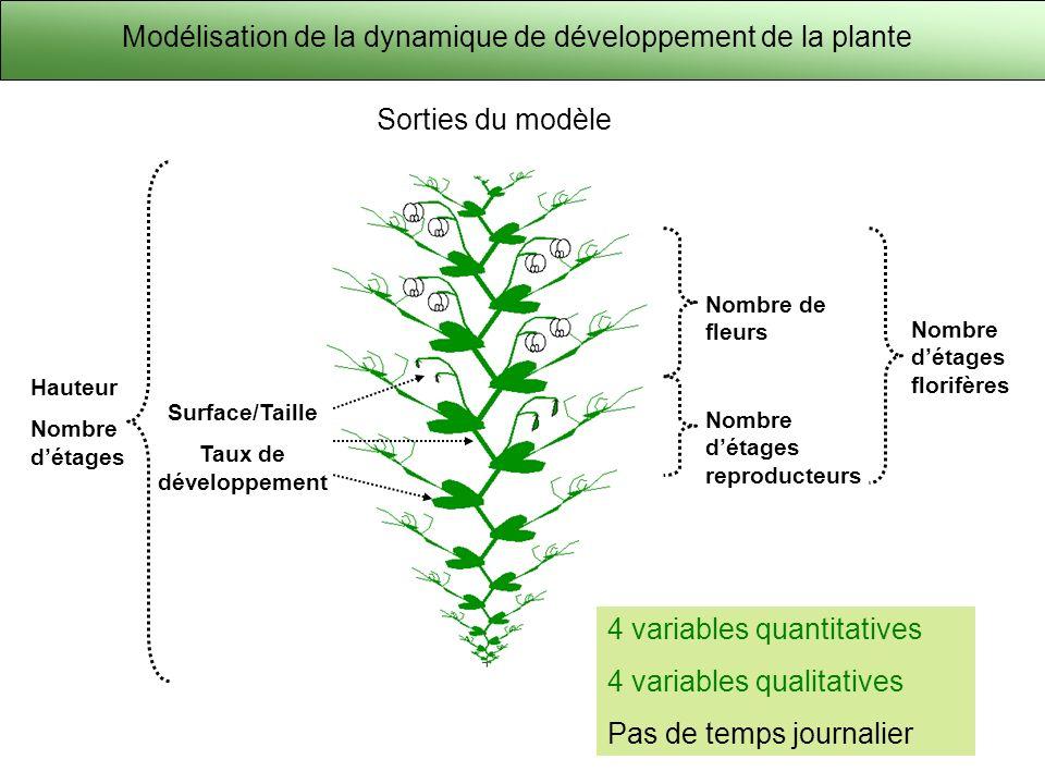 Modélisation de la dynamique de développement de la plante