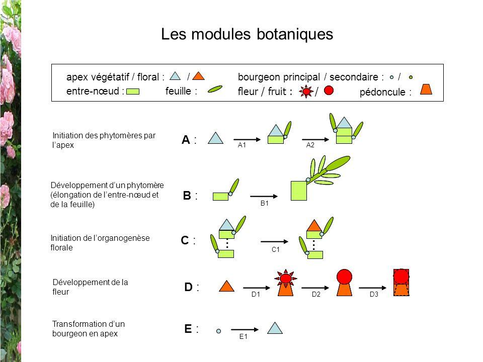 Les modules botaniques