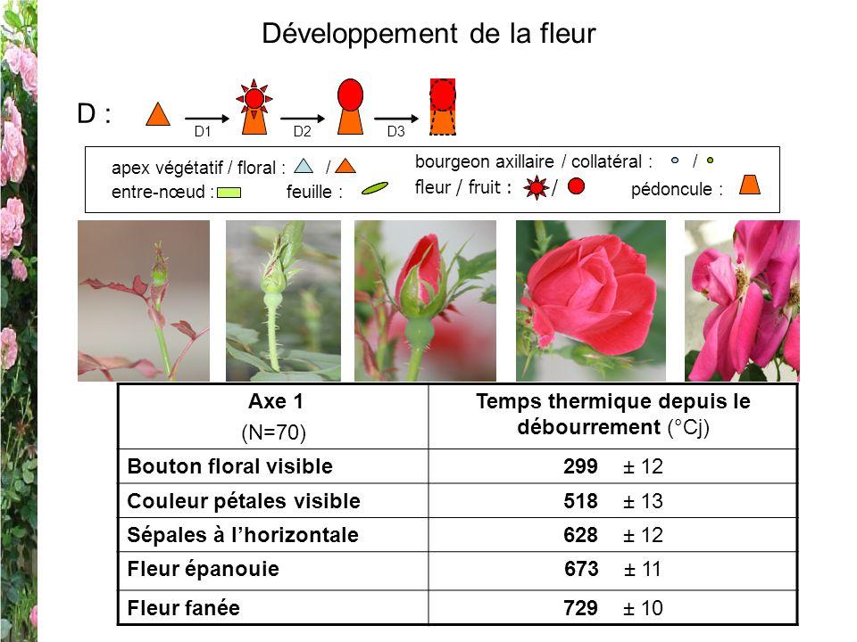 Développement de la fleur