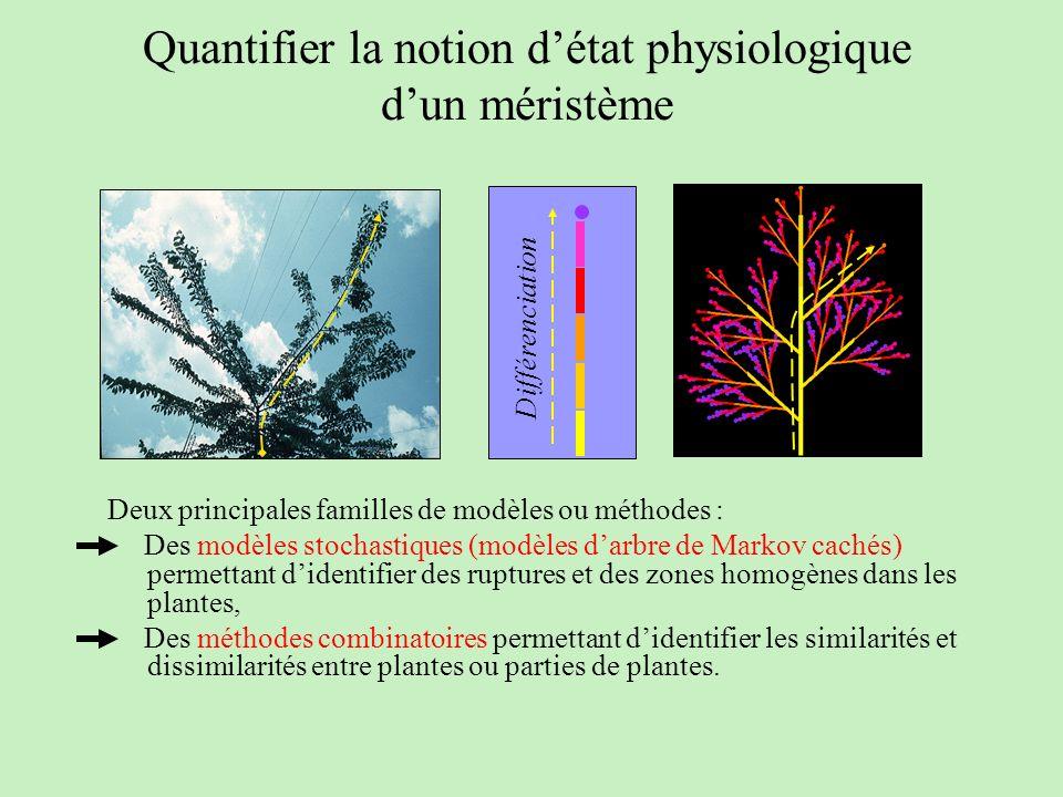 Quantifier la notion d'état physiologique d'un méristème