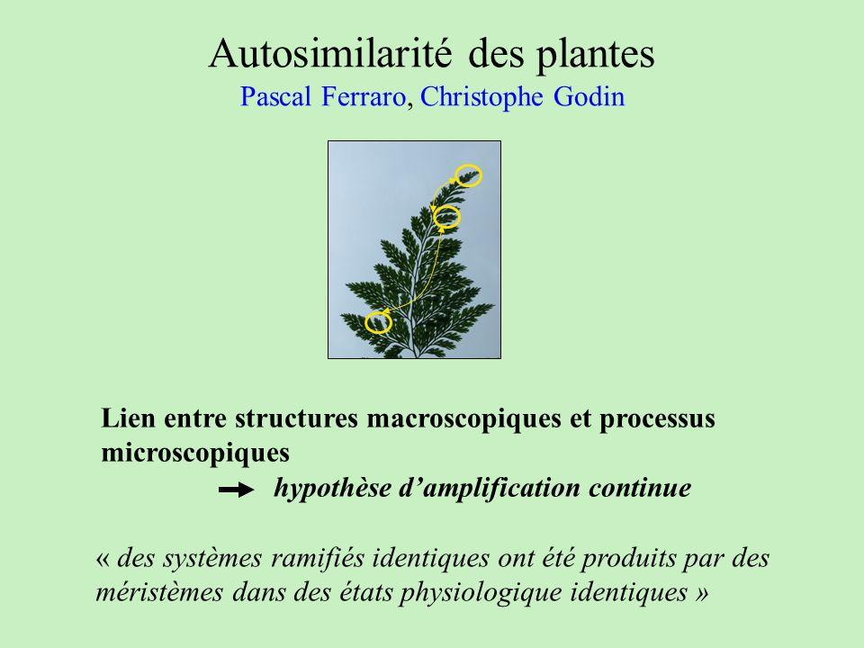 Autosimilarité des plantes Pascal Ferraro, Christophe Godin