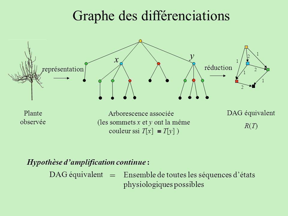 Graphe des différenciations