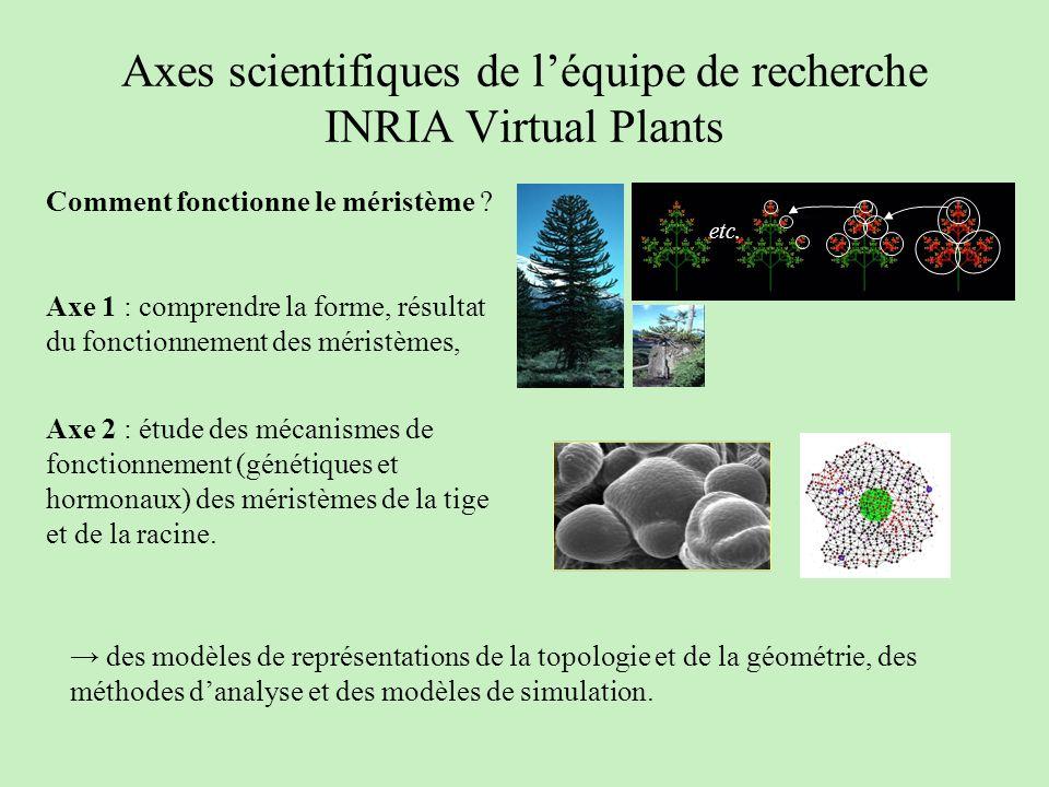 Axes scientifiques de l'équipe de recherche INRIA Virtual Plants