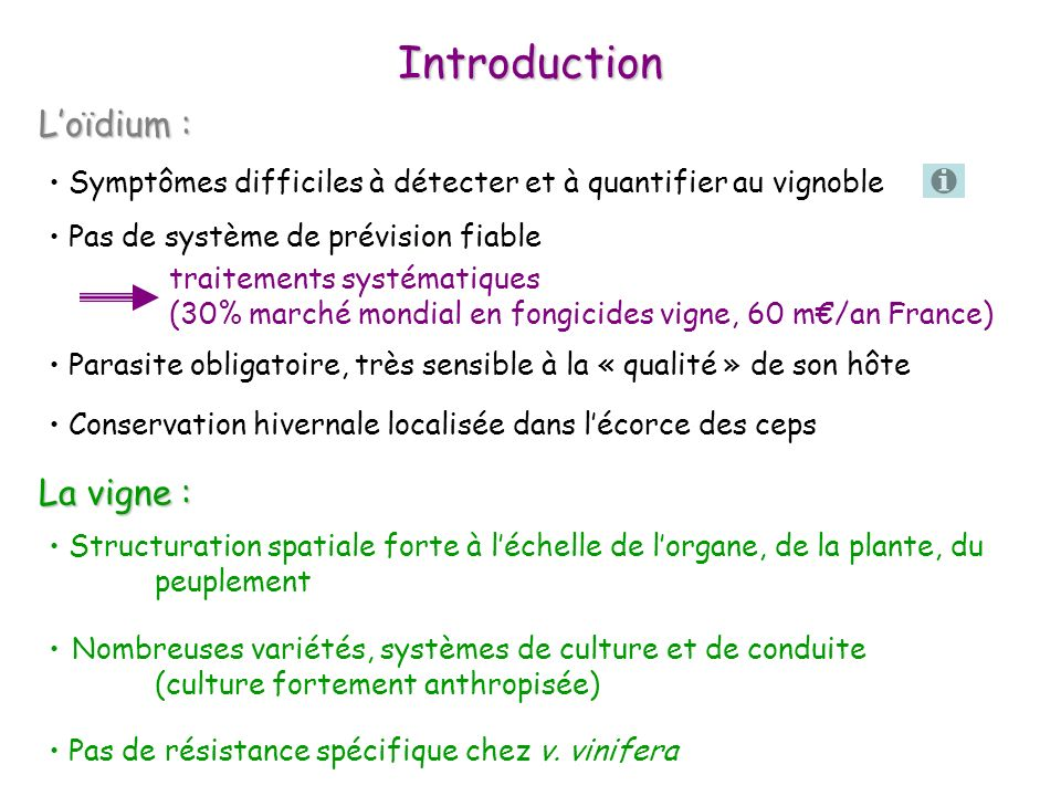 Introduction L'oïdium : La vigne :