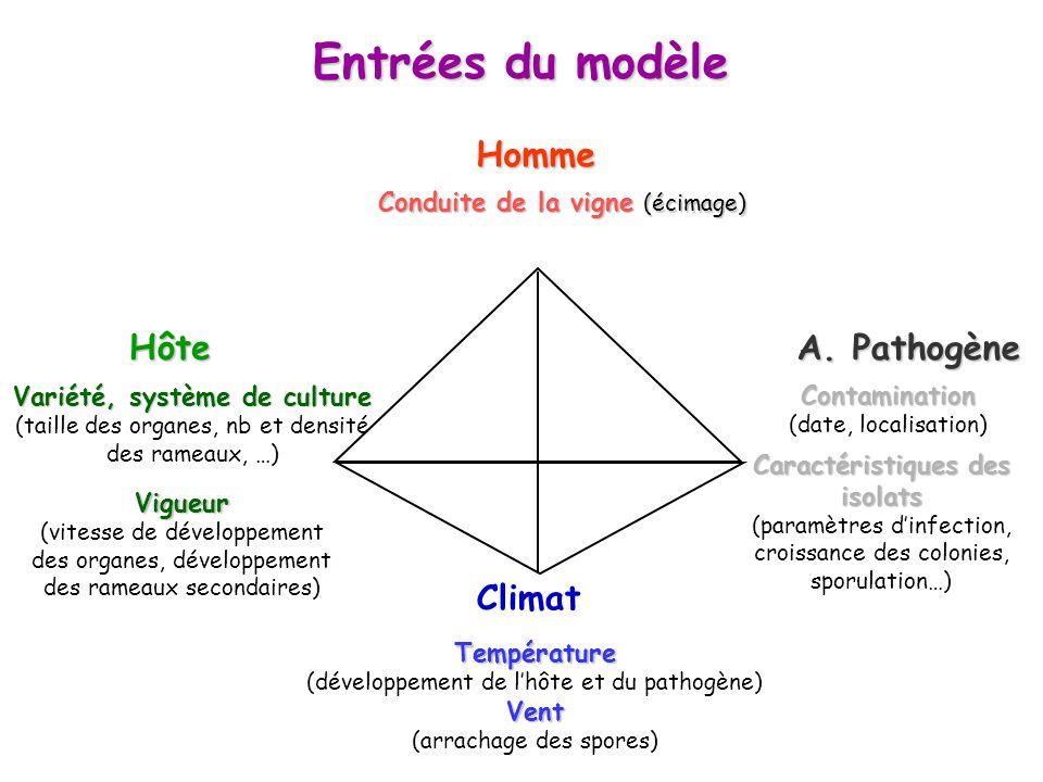 Variété, système de culture Caractéristiques des isolats