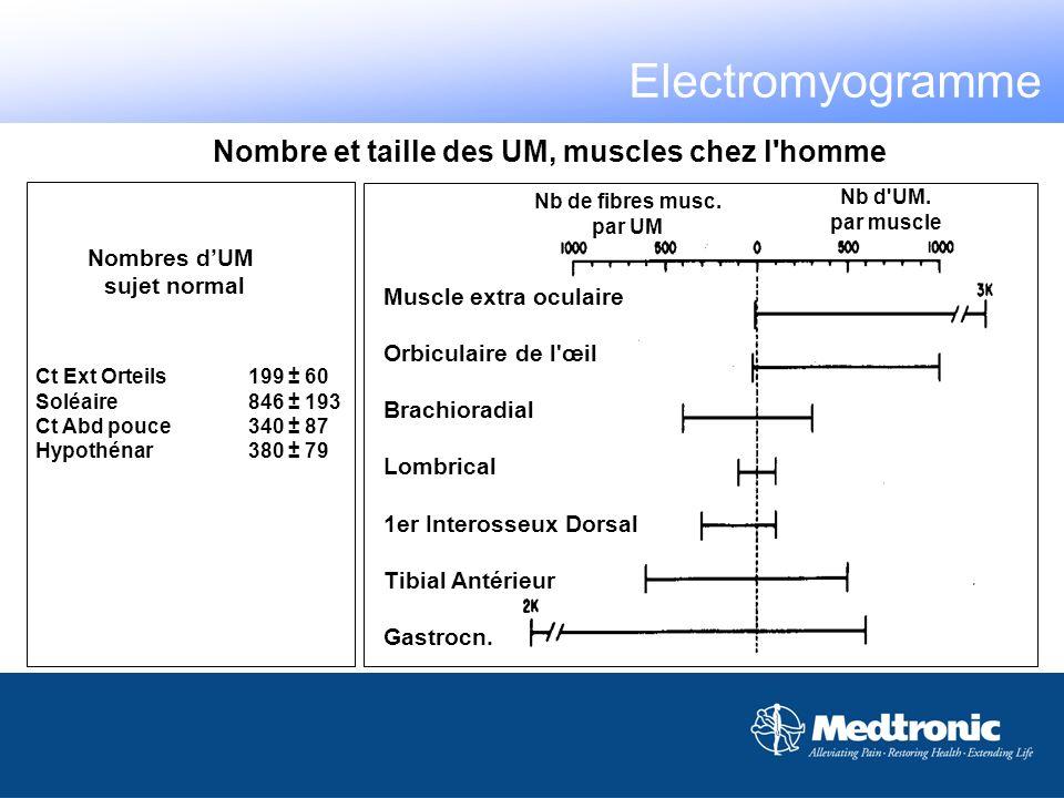 Electromyogramme Nombre et taille des UM, muscles chez l homme