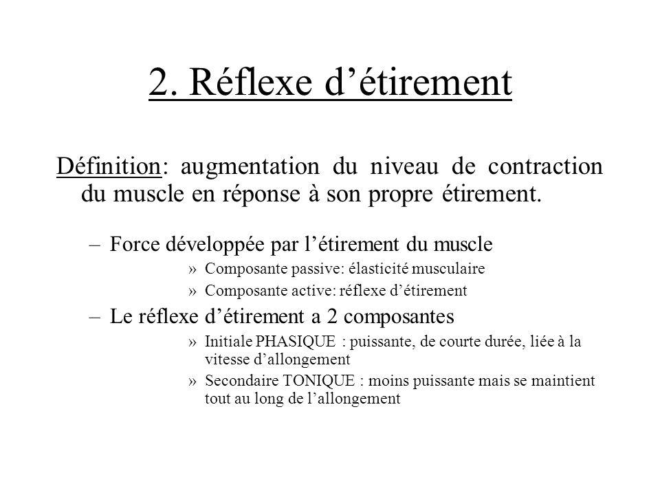 2. Réflexe d'étirement Définition: augmentation du niveau de contraction du muscle en réponse à son propre étirement.