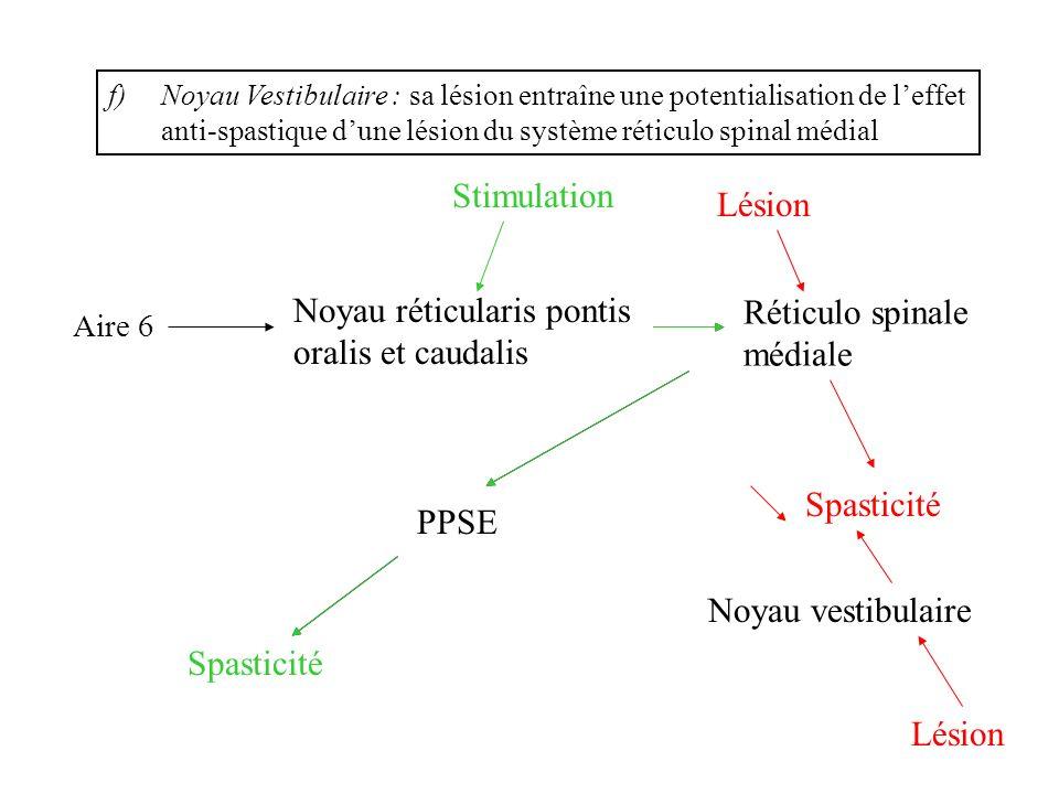 Noyau réticularis pontis oralis et caudalis Réticulo spinale médiale
