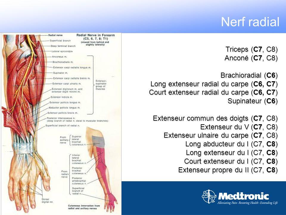 Nerf radial Triceps (C7, C8) Anconé (C7, C8) Brachioradial (C6)