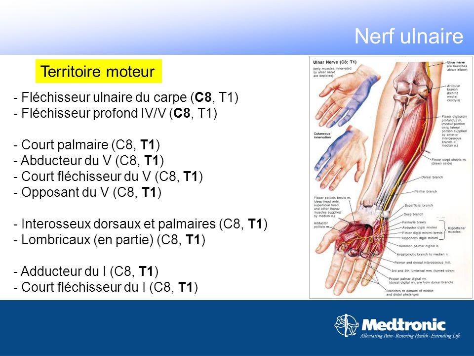 Nerf ulnaire Territoire moteur - Fléchisseur ulnaire du carpe (C8, T1)