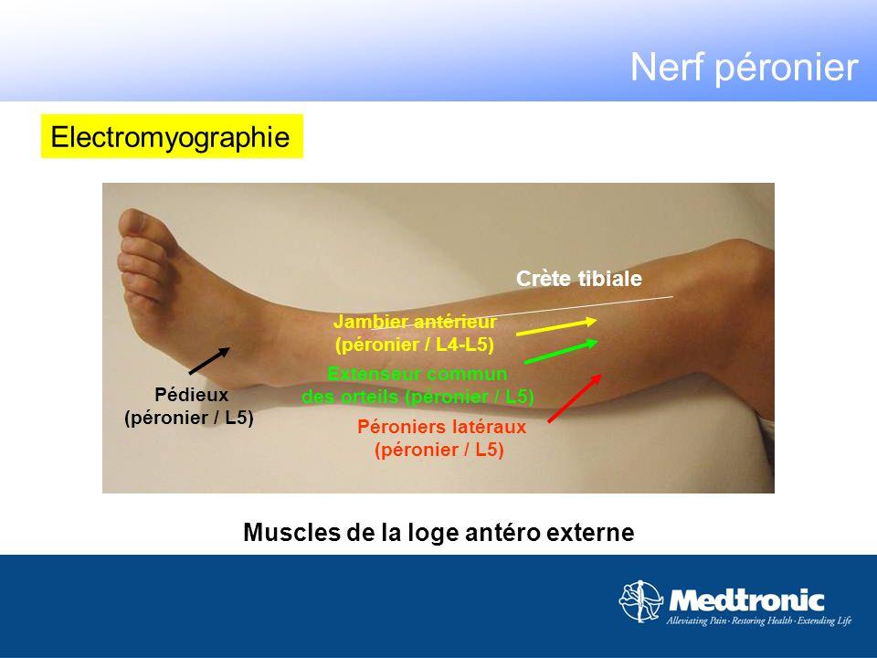 des orteils (péronier / L5) Muscles de la loge antéro externe