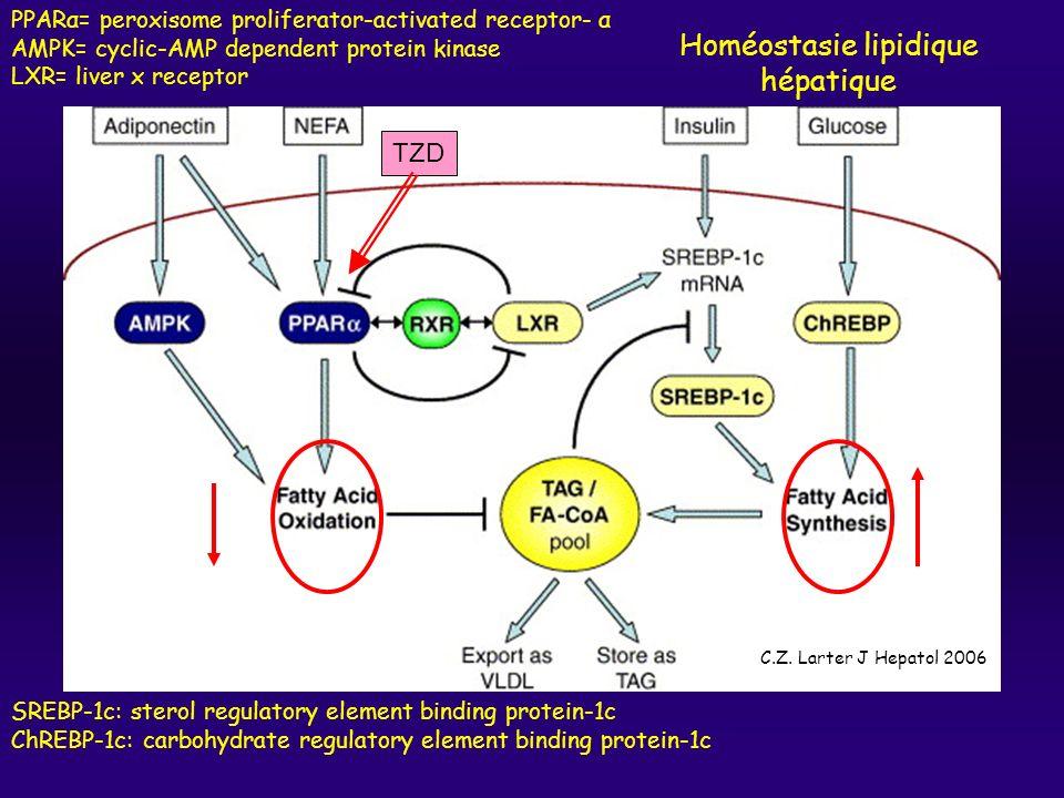 Homéostasie lipidique hépatique