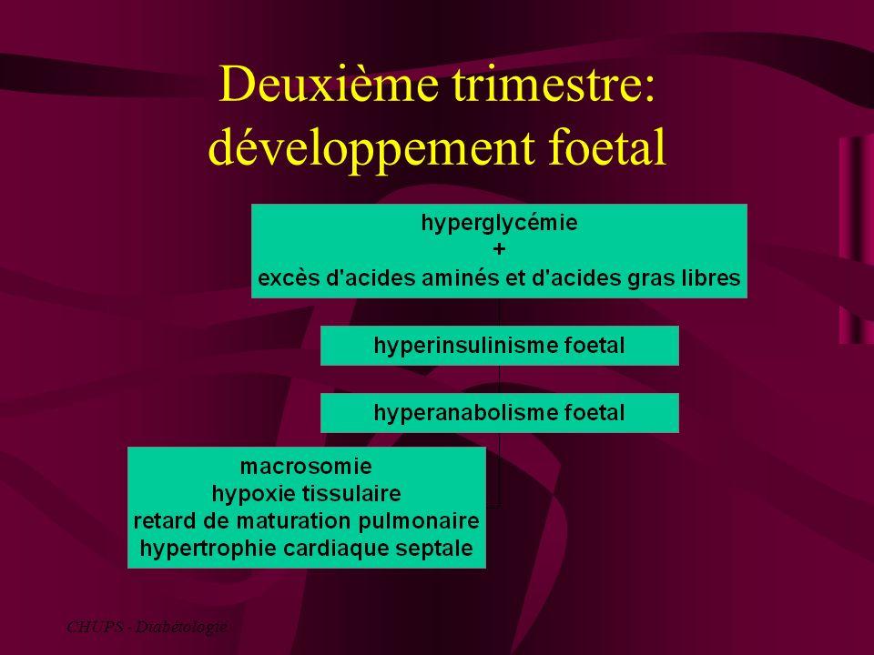 Deuxième trimestre: développement foetal