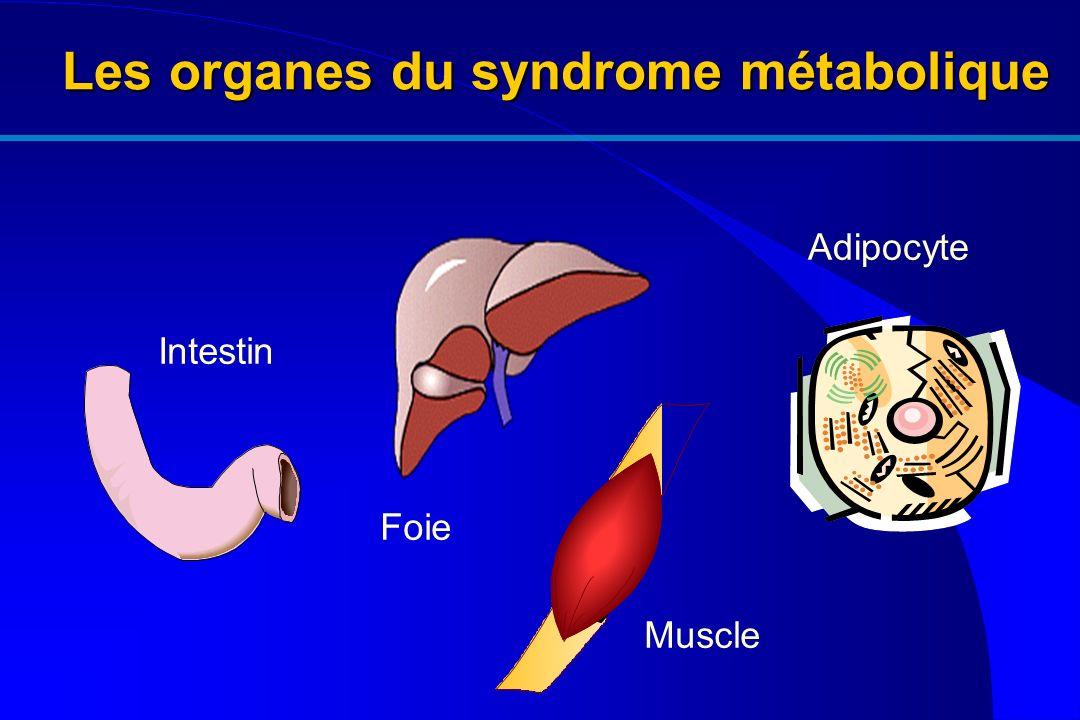 Les organes du syndrome métabolique
