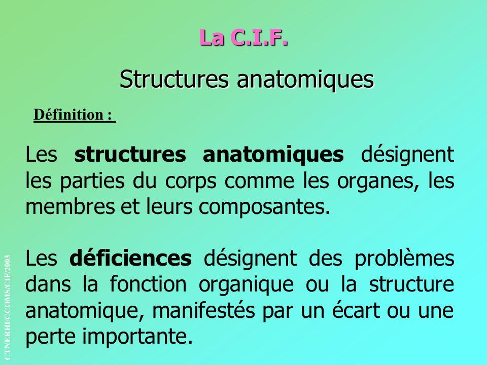 La C.I.F. Structures anatomiques