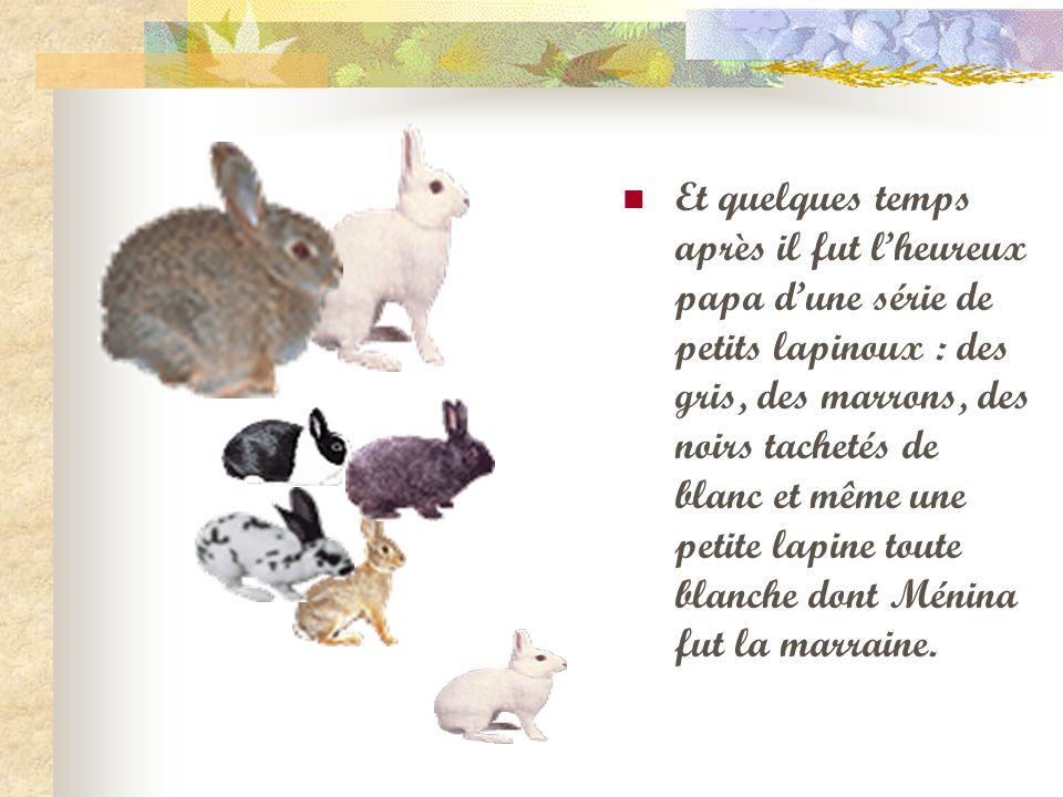 Et quelques temps après il fut l'heureux papa d'une série de petits lapinoux : des gris, des marrons, des noirs tachetés de blanc et même une petite lapine toute blanche dont Ménina fut la marraine.
