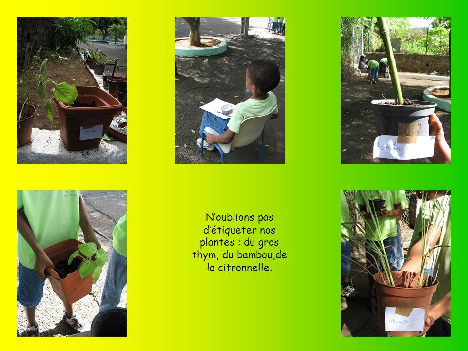 N'oublions pas d'étiqueter nos plantes : du gros thym, du bambou,de la citronnelle.