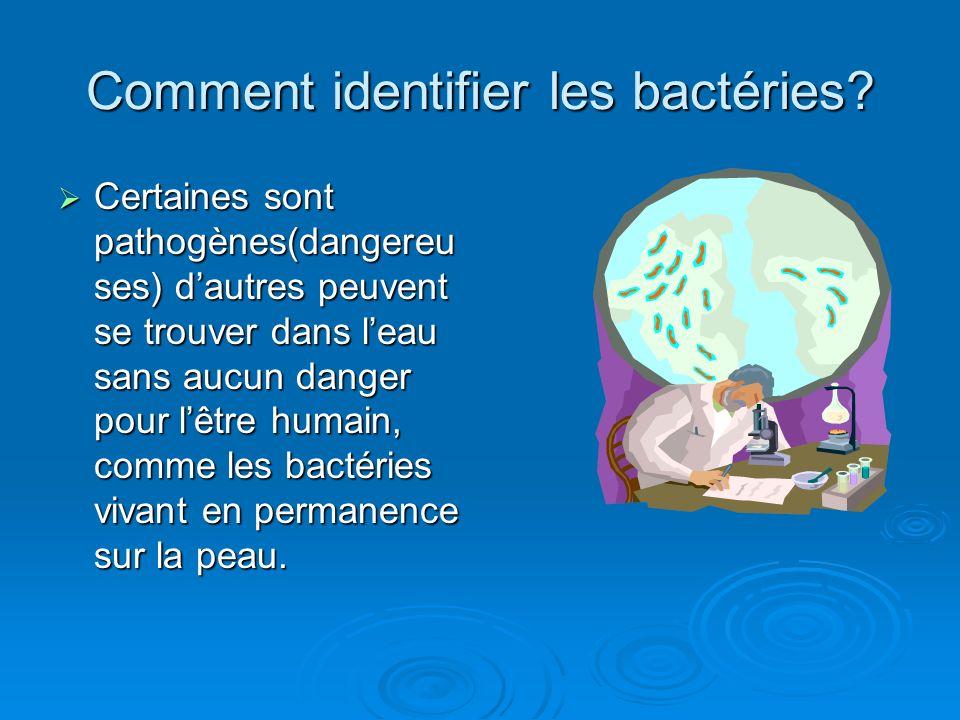 Comment identifier les bactéries