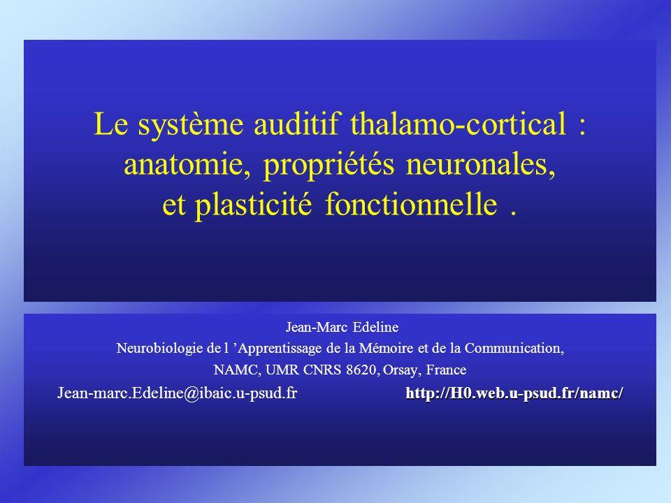 Le système auditif thalamo-cortical : anatomie, propriétés neuronales, et plasticité fonctionnelle .