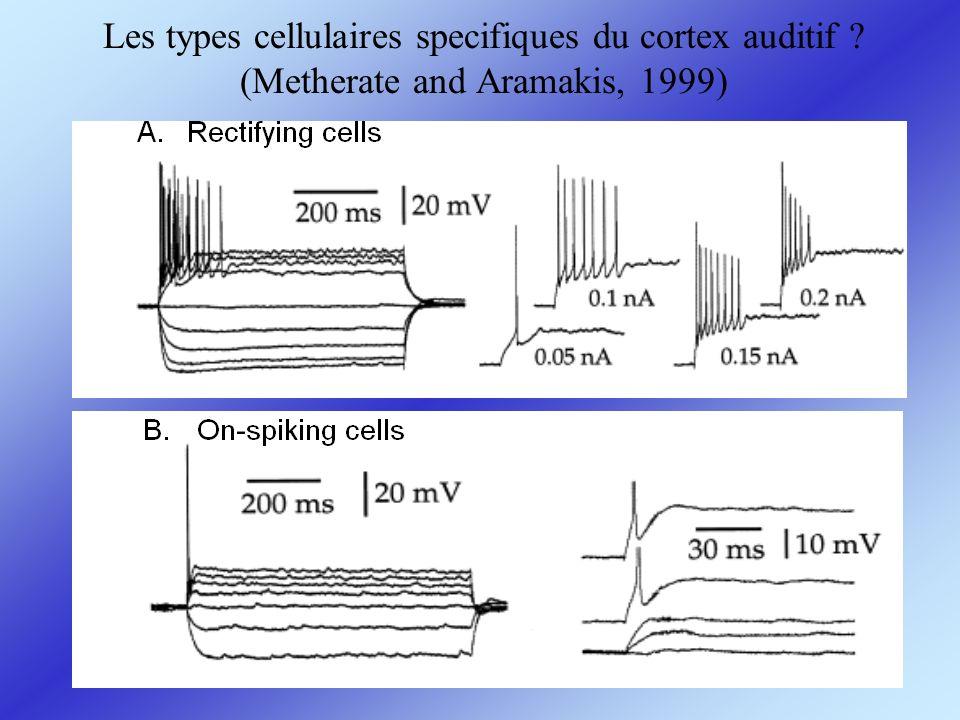 Les types cellulaires specifiques du cortex auditif