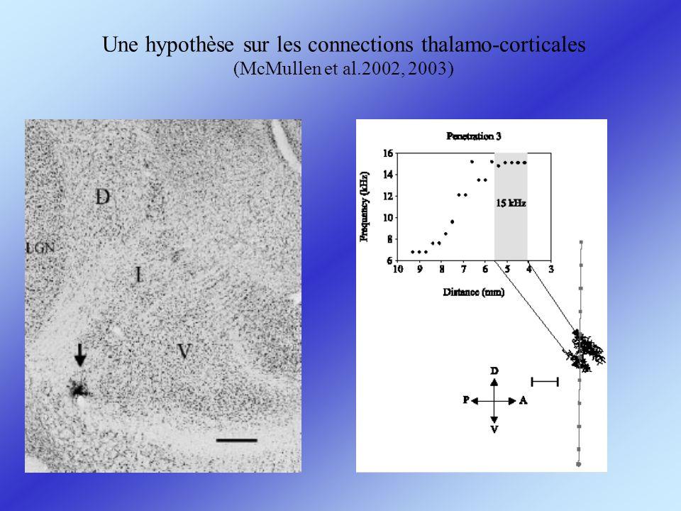Une hypothèse sur les connections thalamo-corticales (McMullen et al