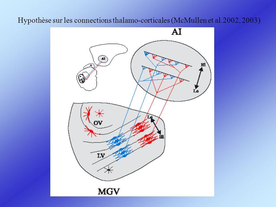 Hypothèse sur les connections thalamo-corticales (McMullen et al