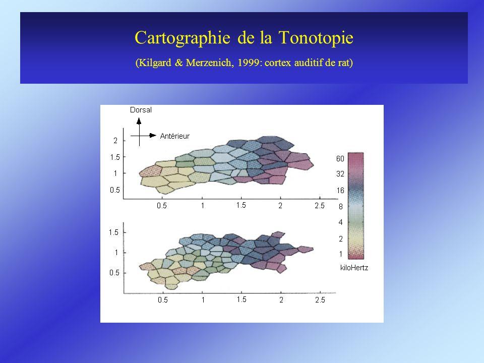 Cartographie de la Tonotopie (Kilgard & Merzenich, 1999: cortex auditif de rat)