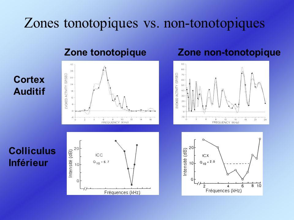 Zones tonotopiques vs. non-tonotopiques
