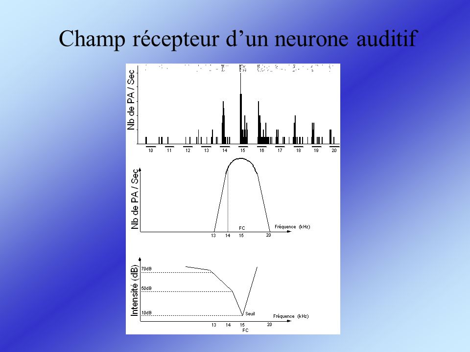 Champ récepteur d'un neurone auditif