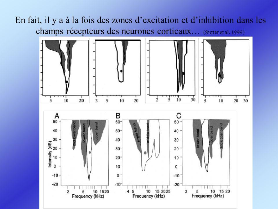 En fait, il y a à la fois des zones d'excitation et d'inhibition dans les champs récepteurs des neurones corticaux… (Sutter et al.