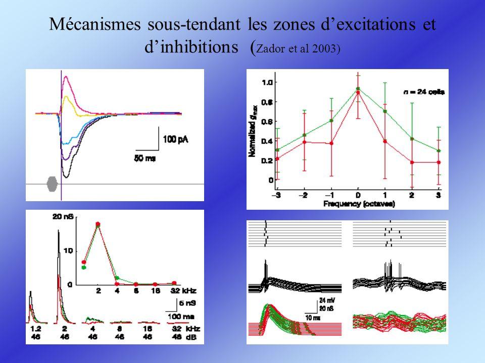 Mécanismes sous-tendant les zones d'excitations et d'inhibitions (Zador et al 2003)