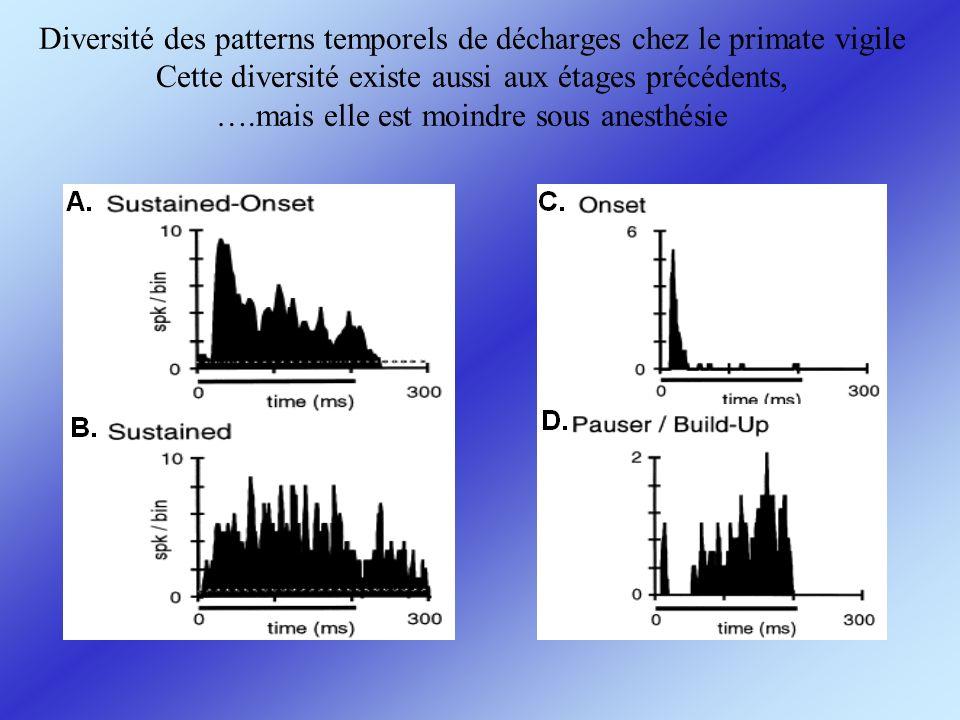 Diversité des patterns temporels de décharges chez le primate vigile Cette diversité existe aussi aux étages précédents, ….mais elle est moindre sous anesthésie
