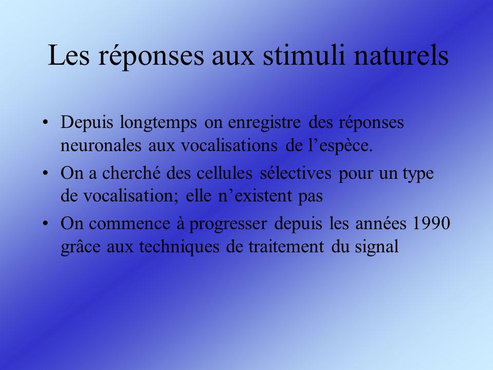 Les réponses aux stimuli naturels