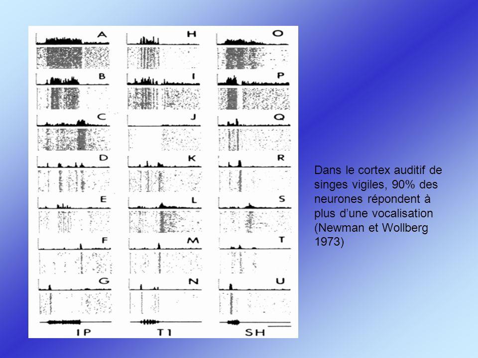 Dans le cortex auditif de singes vigiles, 90% des neurones répondent à