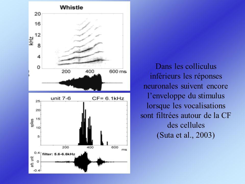 Dans les colliculus inférieurs les réponses neuronales suivent encore l'enveloppe du stimulus lorsque les vocalisations sont filtrées autour de la CF des cellules (Suta et al., 2003)