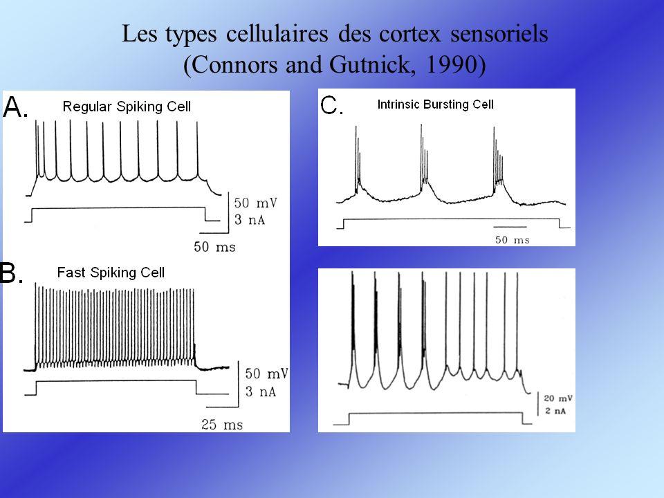 Les types cellulaires des cortex sensoriels (Connors and Gutnick, 1990)
